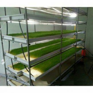 Гидропонный зеленый корм для скота